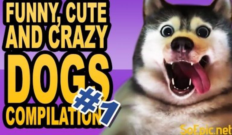 Funny, Cute and Crazy Dogs Compilation 1 – SoEpic