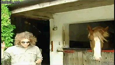 Metal-Head horse