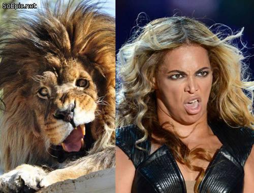 Derpy lion v Beyonce