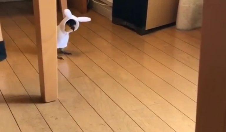 It's a bunny, it's a bird!