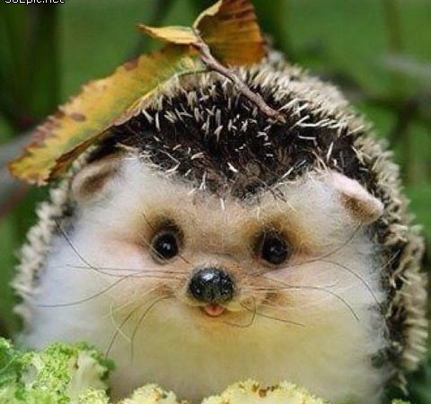 cute felt hedgehog DIY
