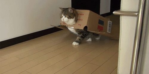 boxes are cat armour