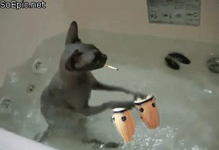 cat plays the drums and smokes cigarette