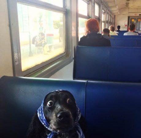 Surprised dog is surprised