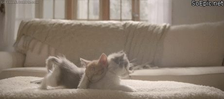 cute cat stretches under another cat