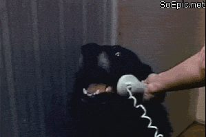 Hello yes, this is dog