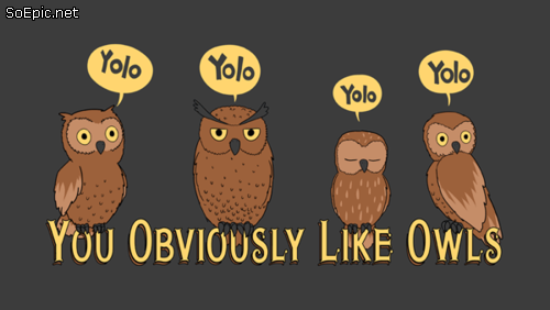 YOLO you obviously like owls