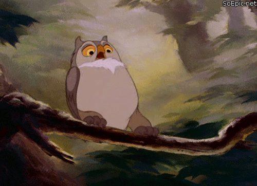 Owl goes crazy