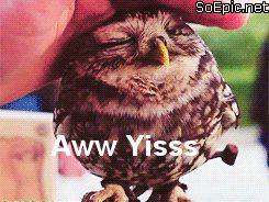 Aww Yisss owl
