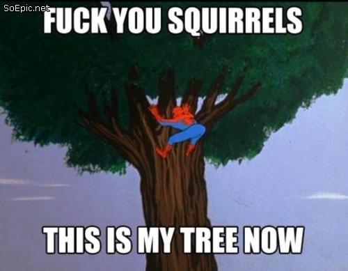 fuck you squirrels!