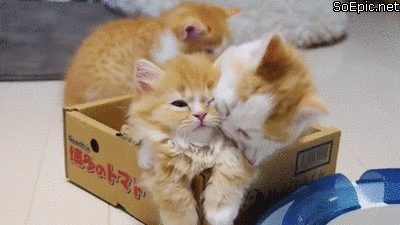 cute kittens playing in box