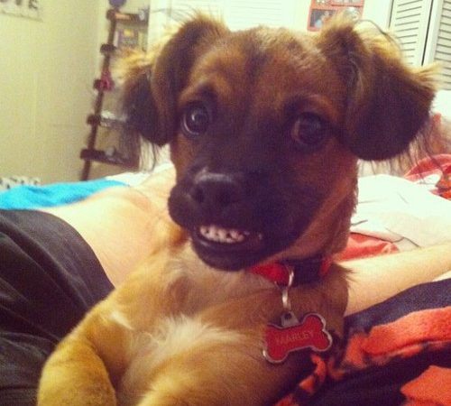 that's a pretty dog Marley