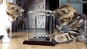 kittens playing with Newton's cradle
