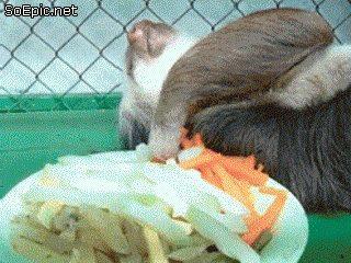 sloth eats slowly