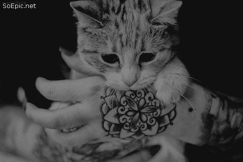 cute kitten and tattooed hand