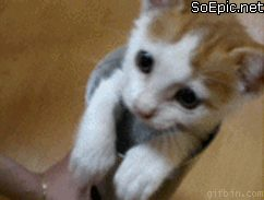 cute kitten dodges touch