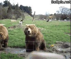 this bear waves to the tourist